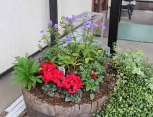玄関横の花々